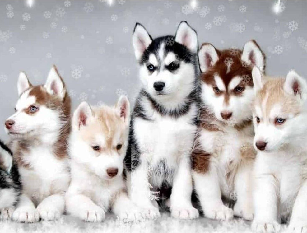 Chiots Husky - Broderie de Diamants