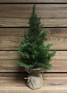 "19"" cedar tree with burlap base"