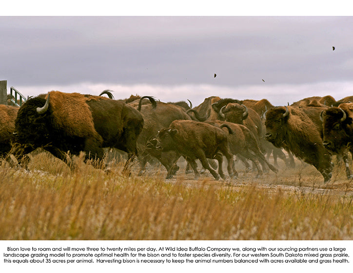 october 2020 buffalo image with informative text