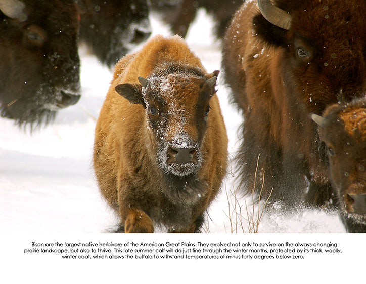 december 2020 buffalo image with informative text