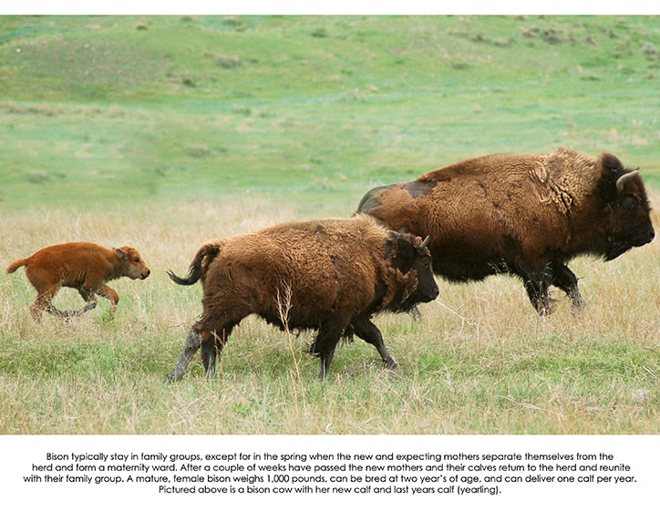 may 2020 buffalo image with informative text