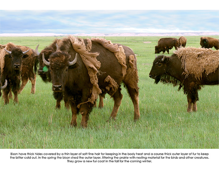 june 2020 buffalo image with informative text