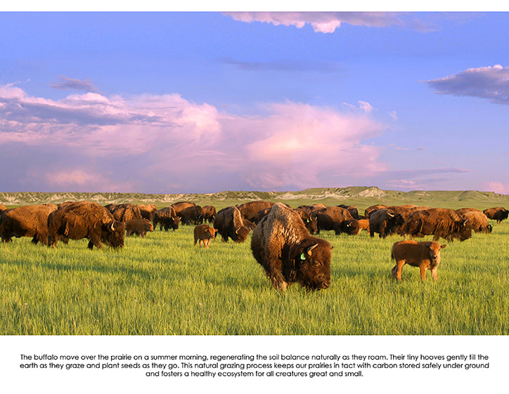 july 2020 buffalo image with informative text