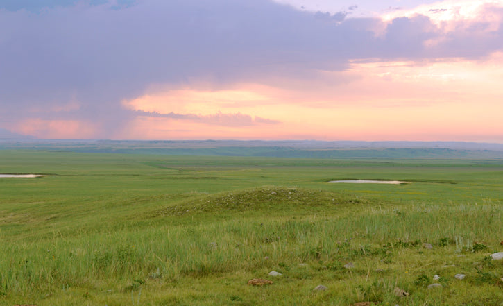 back pasture on the cheyenne river ranch with a purple/pink sky