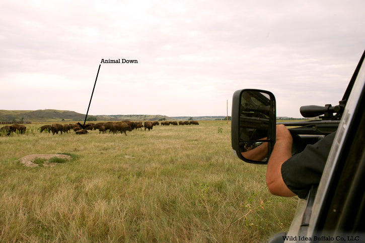 Humane buffalo Field Harvest
