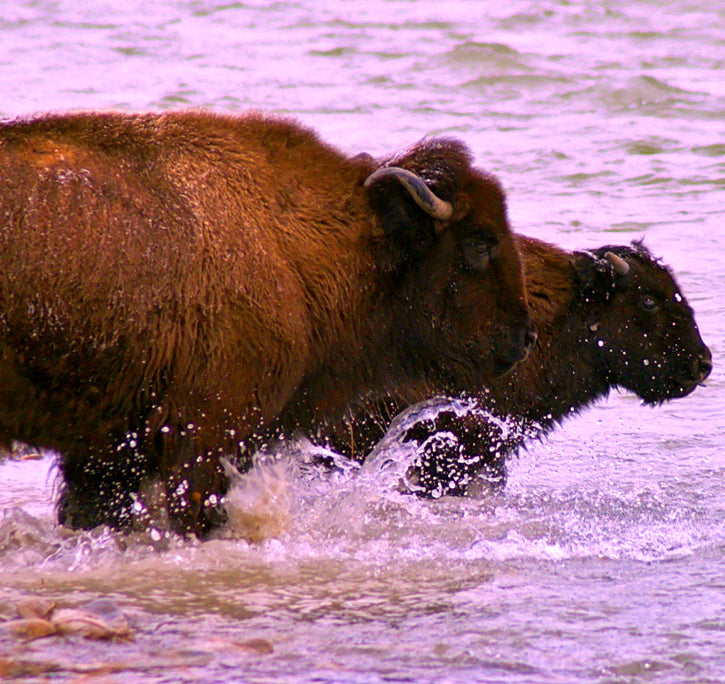 Bison River Crossing
