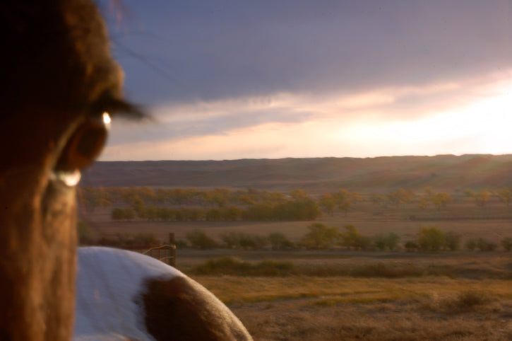 eye of horse with vast prairie behind