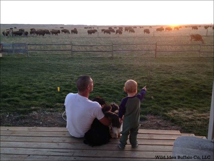 Father & Son watching Buffalo Herd