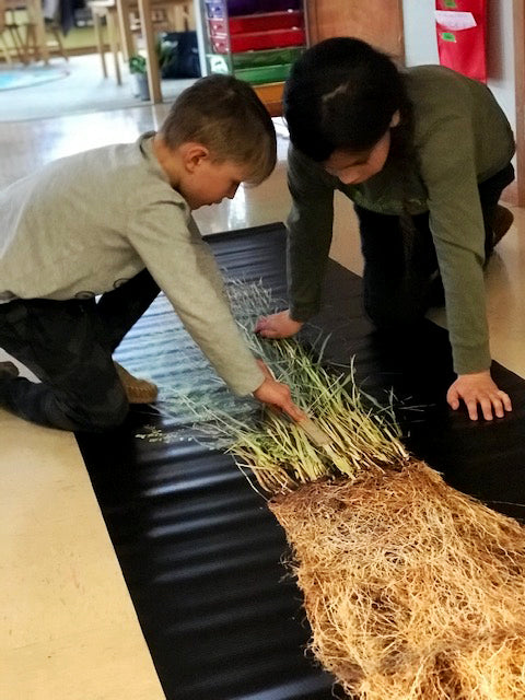 two elementary kids measuring a bluestem plant that is on a 14 foot poster