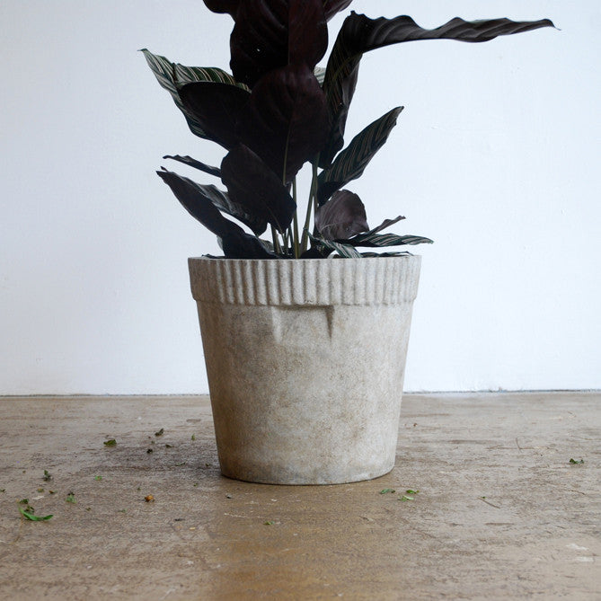 Bucket Concrete Planter