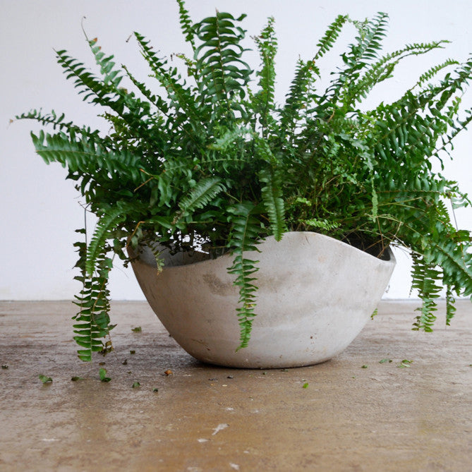 Asymmetric Concrete Planter