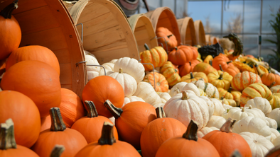 Ways to Welcome and Enjoy Fall