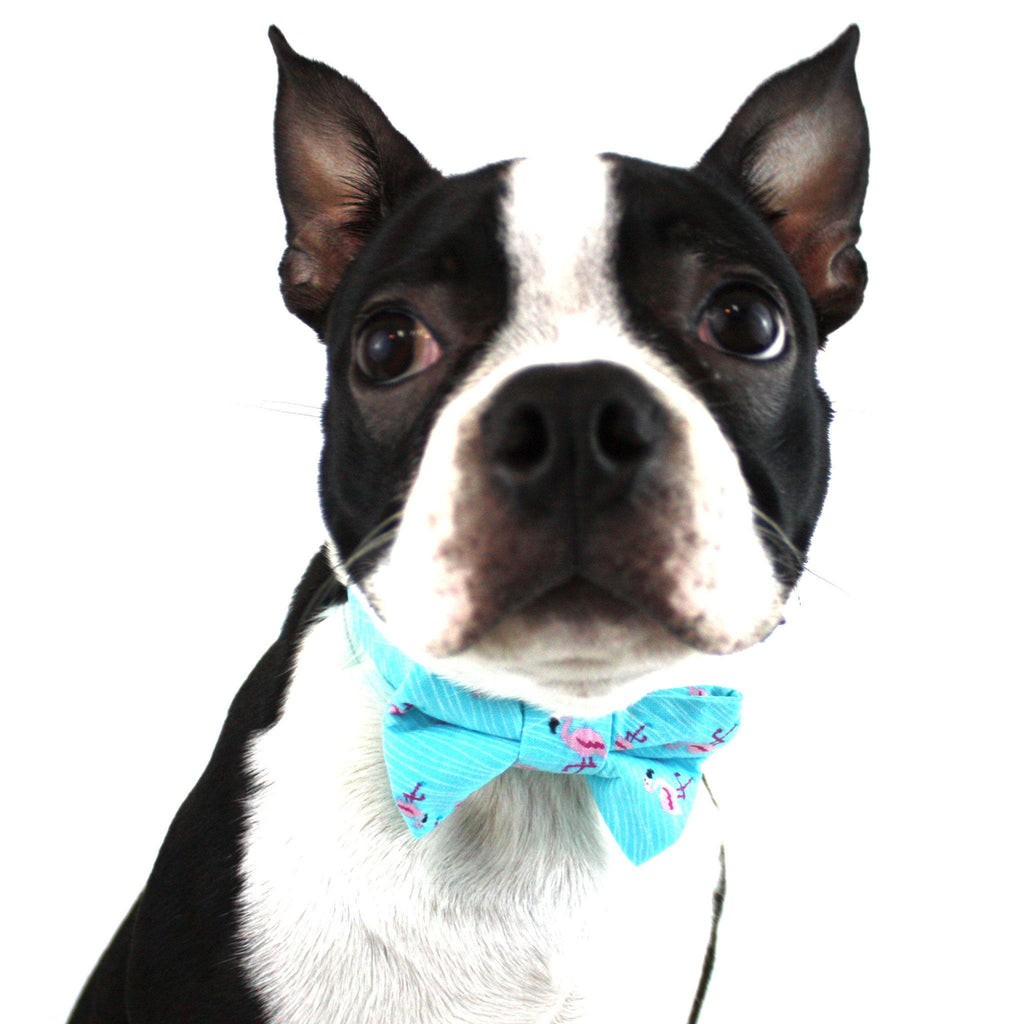 The Max Dog Bow Tie
