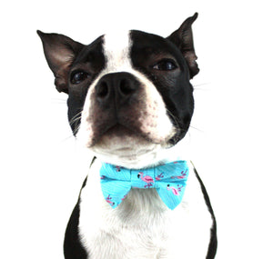 Ella Bing Dog Bow Ties The Max Dog Bow Tie