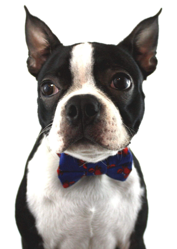 The Mugsy Dog Bow Tie
