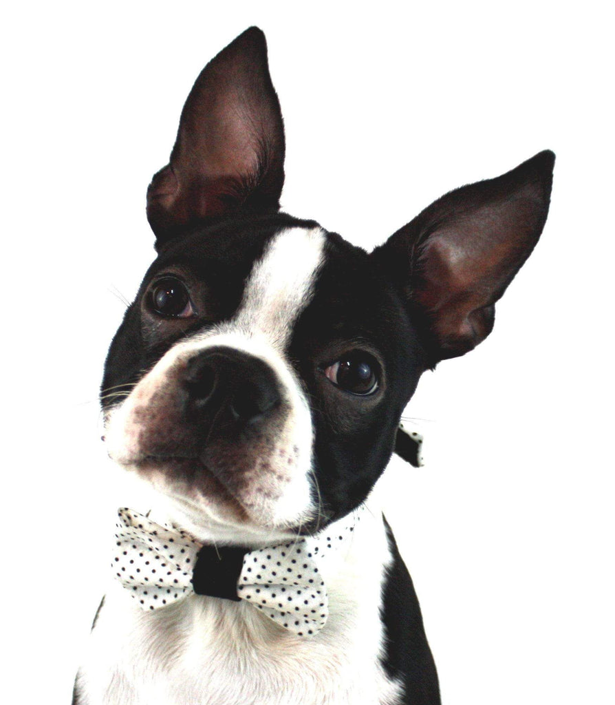 The Uga Dog Bow Tie