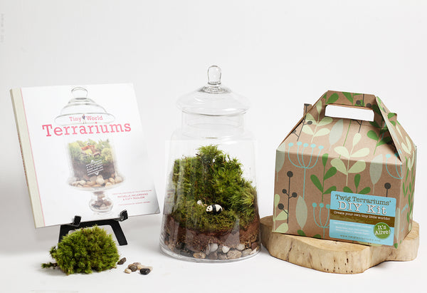 Wholesale Terrariums Kits Twig Terrariums