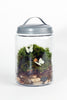 Enchanted Garden DIY Moss Terrarium Kit