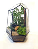 """Rune"" Plant Terrarium (NYC Local Only)"
