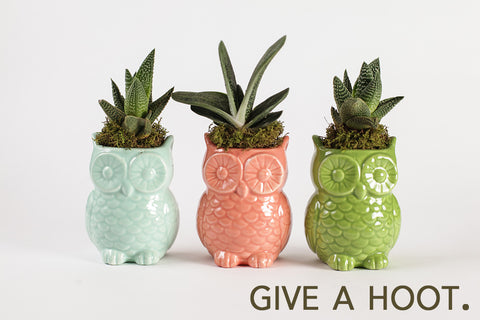 Give a Hoot.