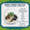 Here Comes the Sun Succulent Terrarium Kit