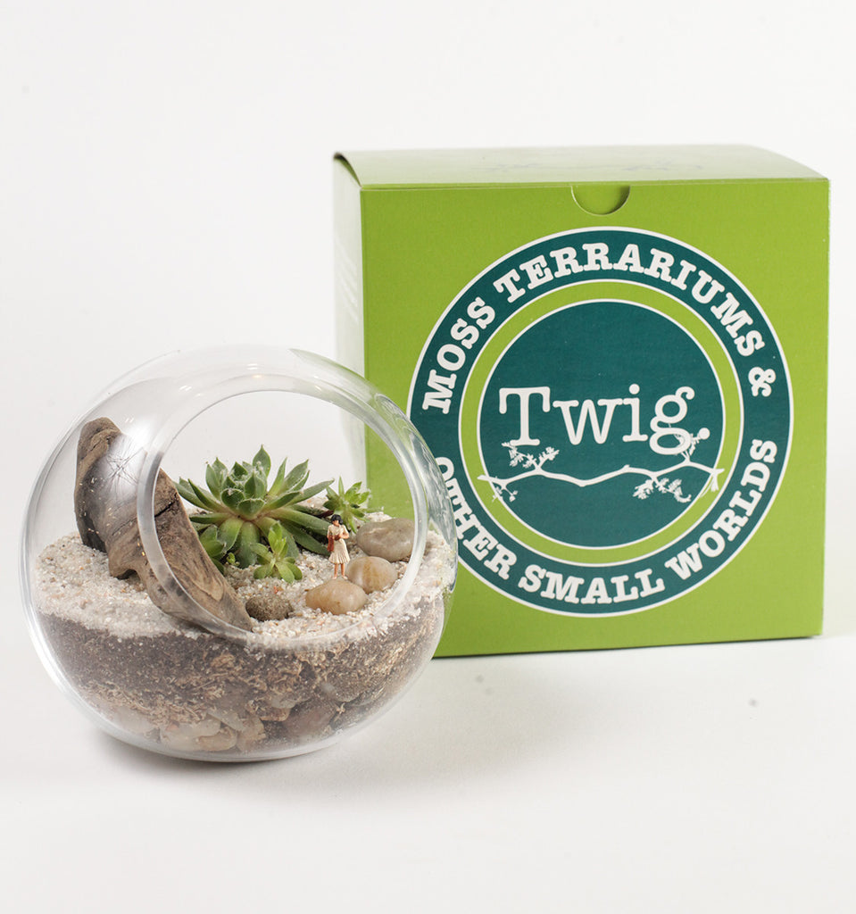 Here comes the sun succulent terrarium kit by twig terrarium twig here comes the sun succulent terrarium kit solutioingenieria Image collections