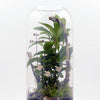 """Homeward Bound"" Plant Terrarium (NYC Local Only)"