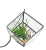 Instant Vacation Airplant Terrarium Kit