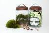 Jurassic in a Jar DIY Terrarium Kit