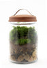 Group Moss Terrarium-Making Workshop 4/15/2017