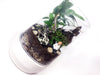 """Nama-Stay"" Plant Terrarium (NYC Local Only)"