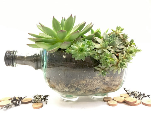 Recycled Wine Jug Succulent Terrarium (DIY or Readymade)
