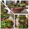 """The Plentiful Planter"" Succulent Centerpiece (NYC Local Only)"