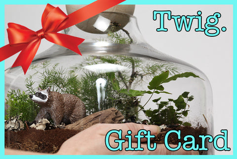 Twig Gift Certificate $100