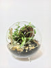 """Shroom It"" Plant Terrarium (NYC Local Only)"