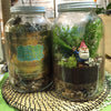 The Gnome Home DIY Plant Terrarium Kit