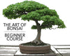 The Art of Bonsai - A Beginner Class on Sunday, June 18th!