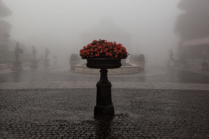 Red flowers in a stone vase within a courtyard and extreme weather conditions making it look grey and misty