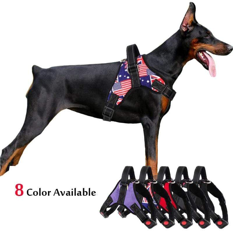 SportsChest Dog Harness BLACK / XL Dogs Harness