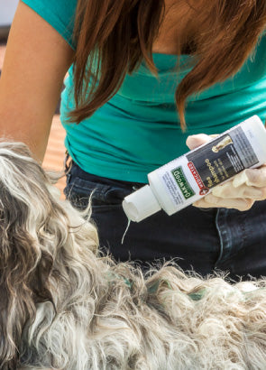 clean/Medicated Flea Shampoo -cleaning supplies