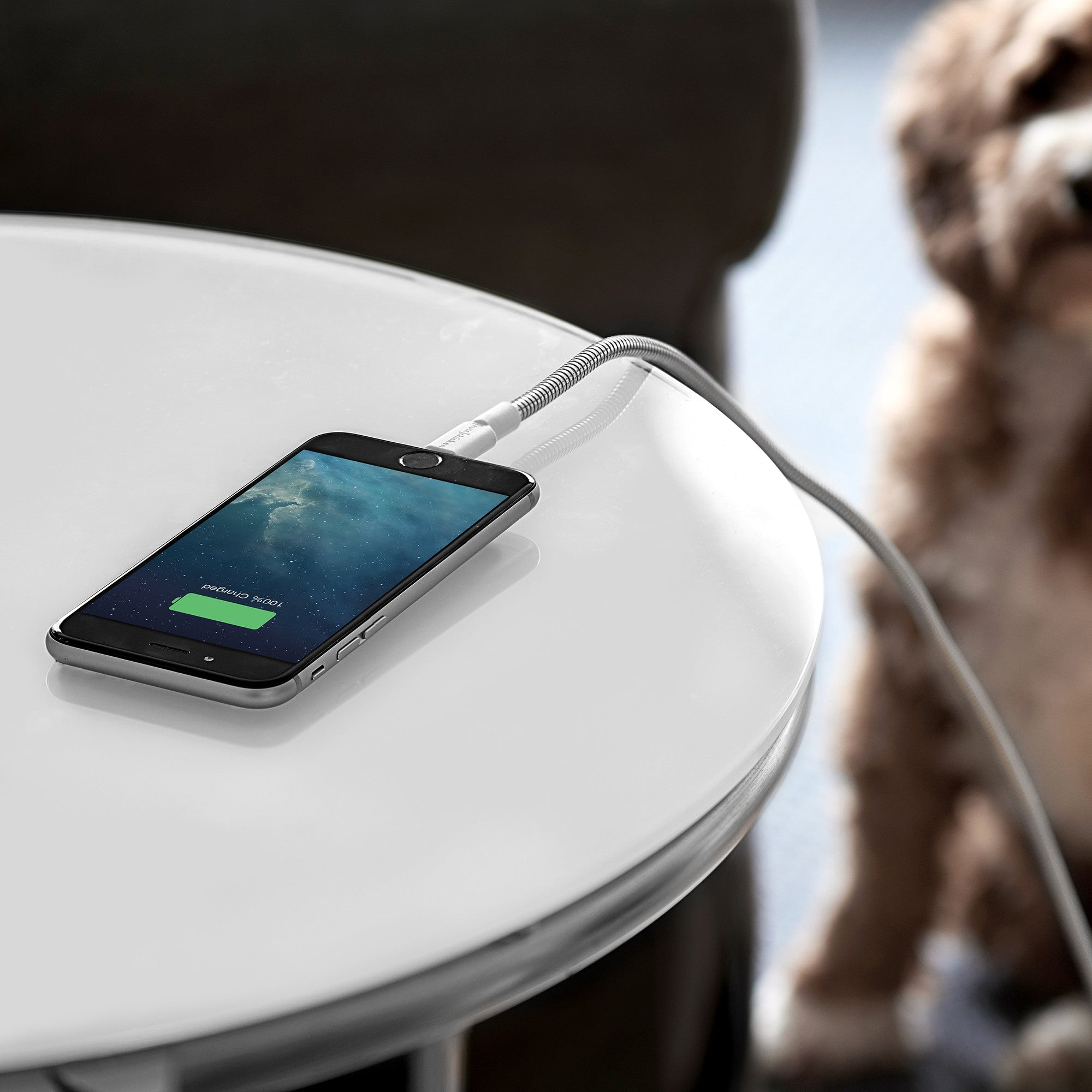 Titan withdog2?v=1545066263 no more frayed iphone cables! titan is the toughest cable on earth