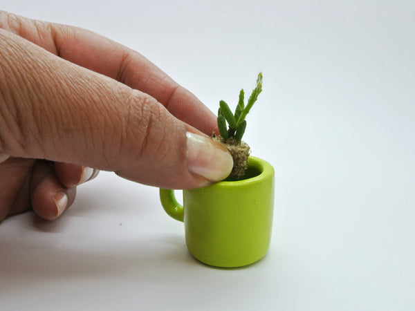 Transplanting Miniature Desktop garden cacti and succulent plants