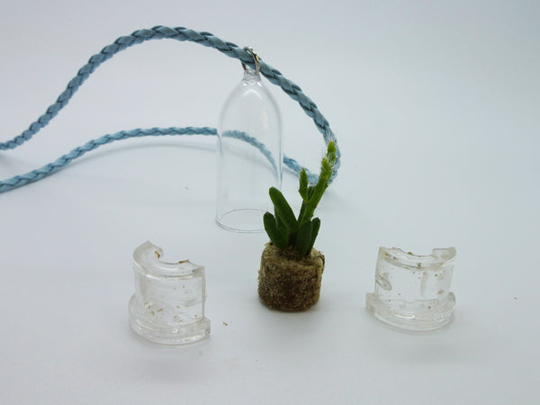 Live Succulent Necklace plants - BooBoo Plant