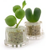 Mini Pet Plants out of the capsules