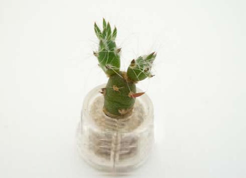 Needle Boo Boo Plant live terrarium necklace jewelry