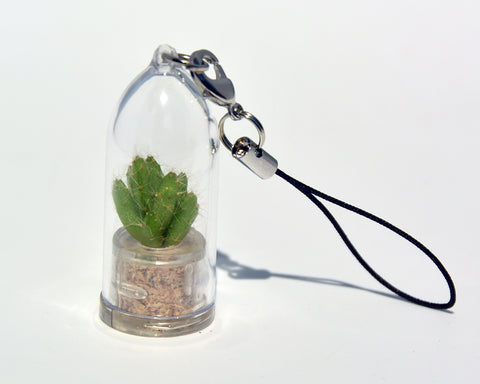 Live Plant Necklace - Apple Cactus - Terrarium Necklace - BooBoo Plant