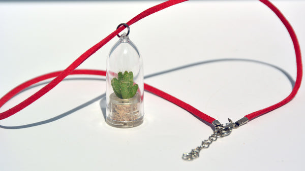 Apple Cactus - Terrarium Plant Necklace