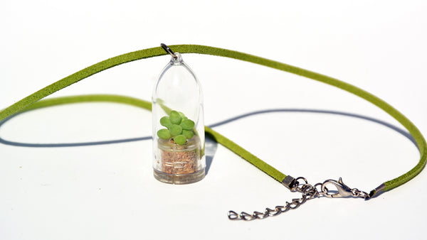 Bubbly Live Plant Necklace - Terrarium Suede Green necklace - BooBoo Plant