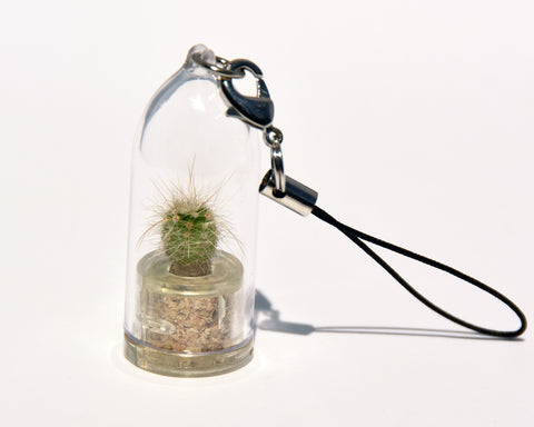 Fluffy - Live Plant Necklace, Terrarium necklace plants - BooBoo Plant
