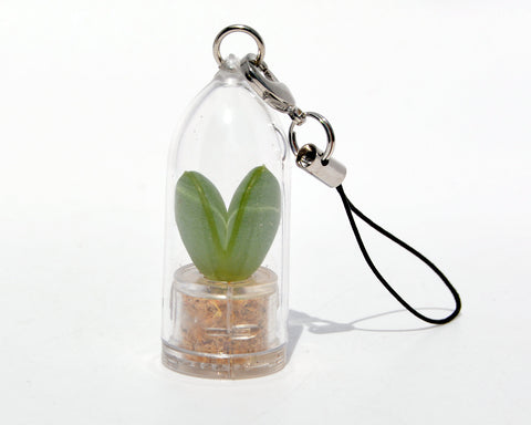 Sweetheart - Live Plant Necklace